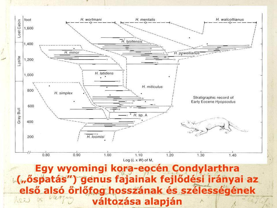 """Egy wyomingi kora-eocén Condylarthra (""""őspatás ) genus fajainak fejlődési irányai az első alsó őrlőfog hosszának és szélességének változása alapján"""