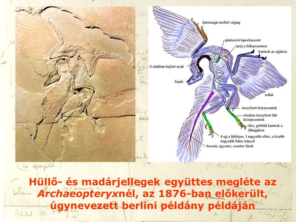 Hüllő- és madárjellegek együttes megléte az Archaeopteryxnél, az 1876-ban előkerült, úgynevezett berlini példány példáján