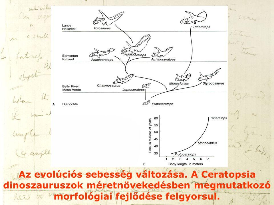 Az evolúciós sebesség változása