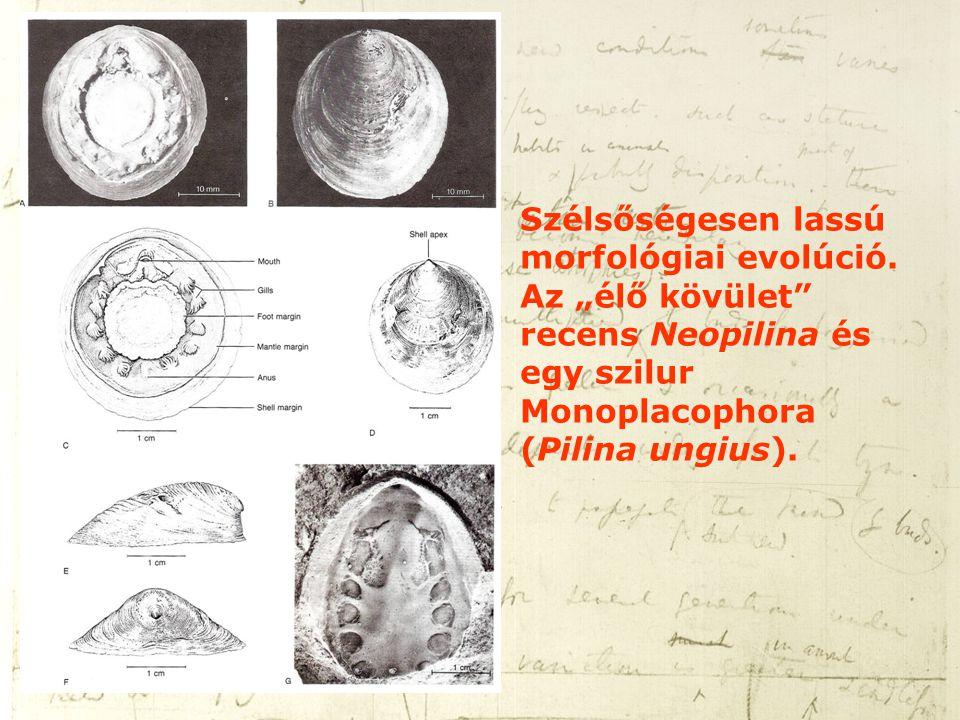 Szélsőségesen lassú morfológiai evolúció