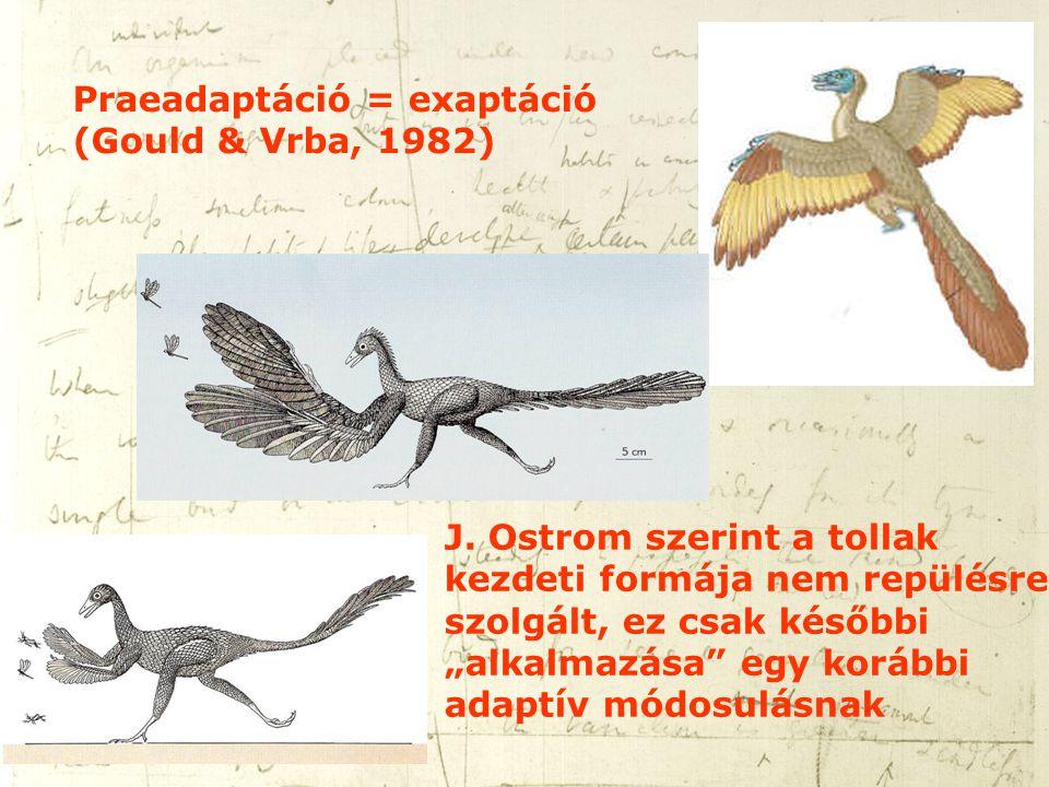 Praeadaptáció = exaptáció (Gould & Vrba, 1982)
