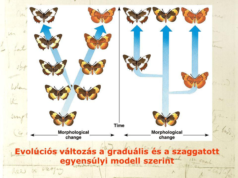 Evolúciós változás a graduális és a szaggatott egyensúlyi modell szerint