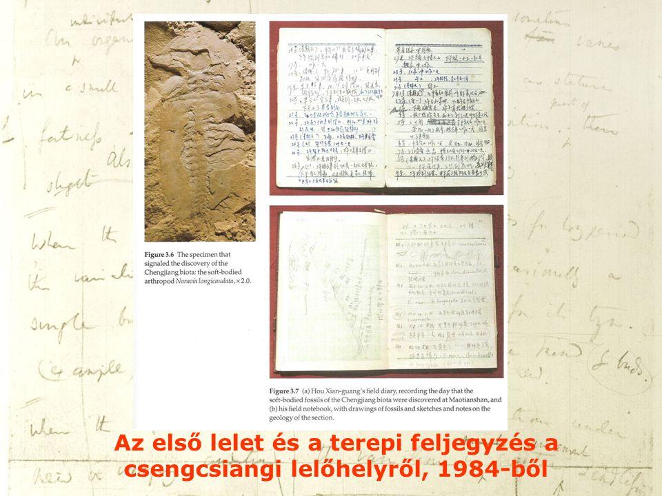Az első lelet és a terepi feljegyzés a csengcsiangi lelőhelyről, 1984-ből