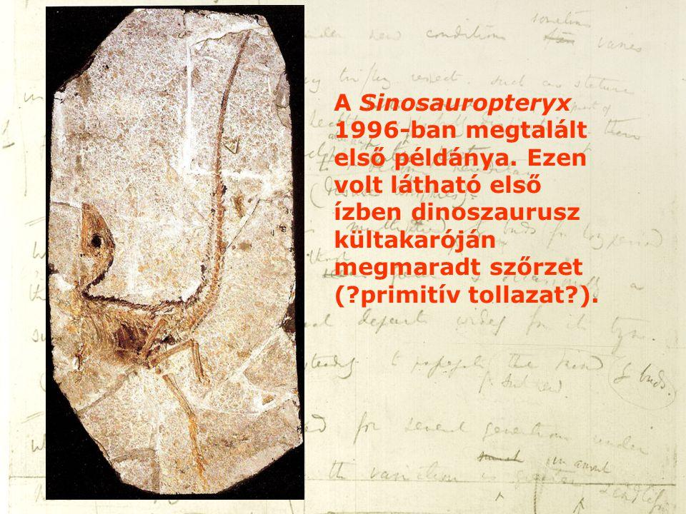 A Sinosauropteryx 1996-ban megtalált első példánya