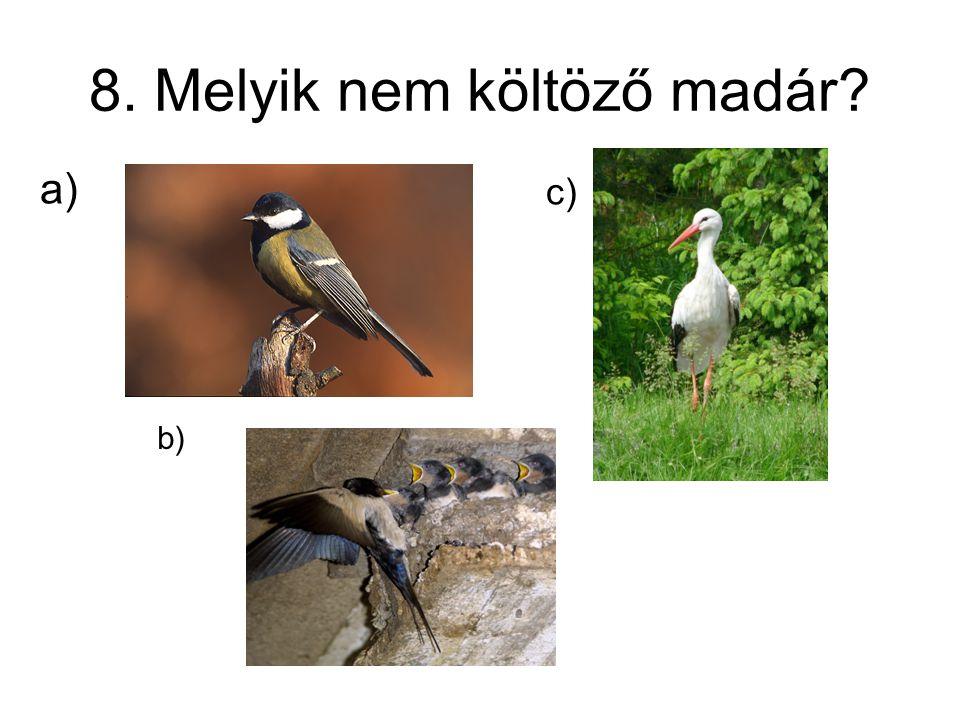 8. Melyik nem költöző madár