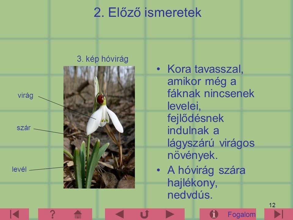 2. Előző ismeretek 3. kép hóvirág. Kora tavasszal, amikor még a fáknak nincsenek levelei, fejlődésnek indulnak a lágyszárú virágos növények.