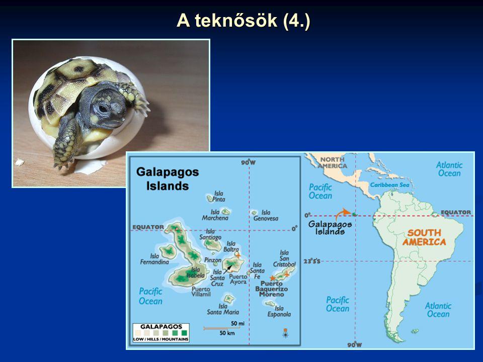 A teknősök (4.)