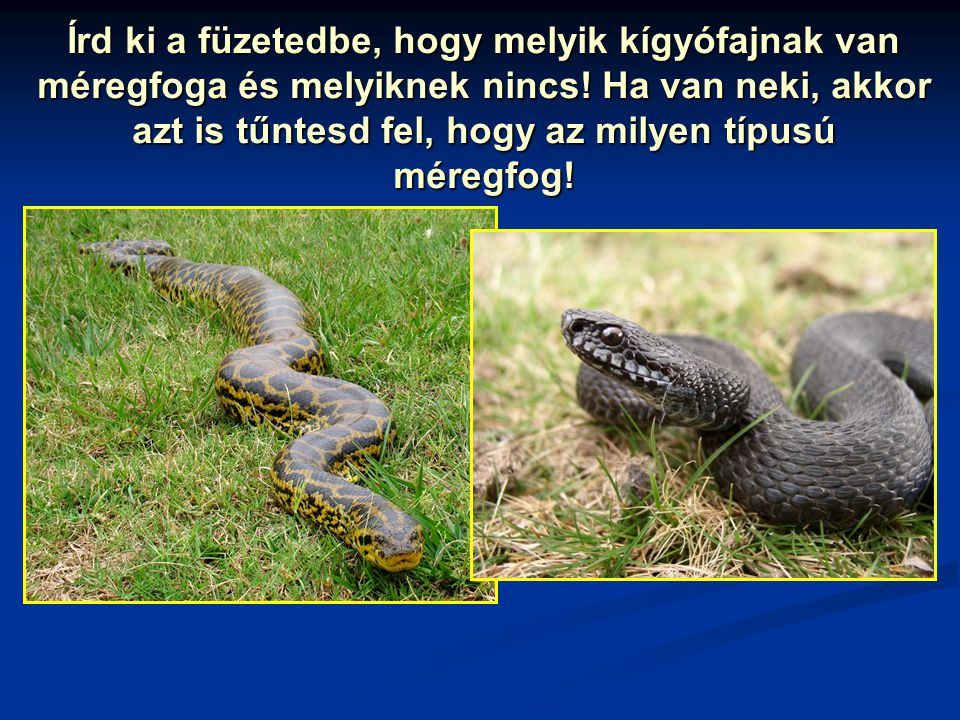 Írd ki a füzetedbe, hogy melyik kígyófajnak van méregfoga és melyiknek nincs.