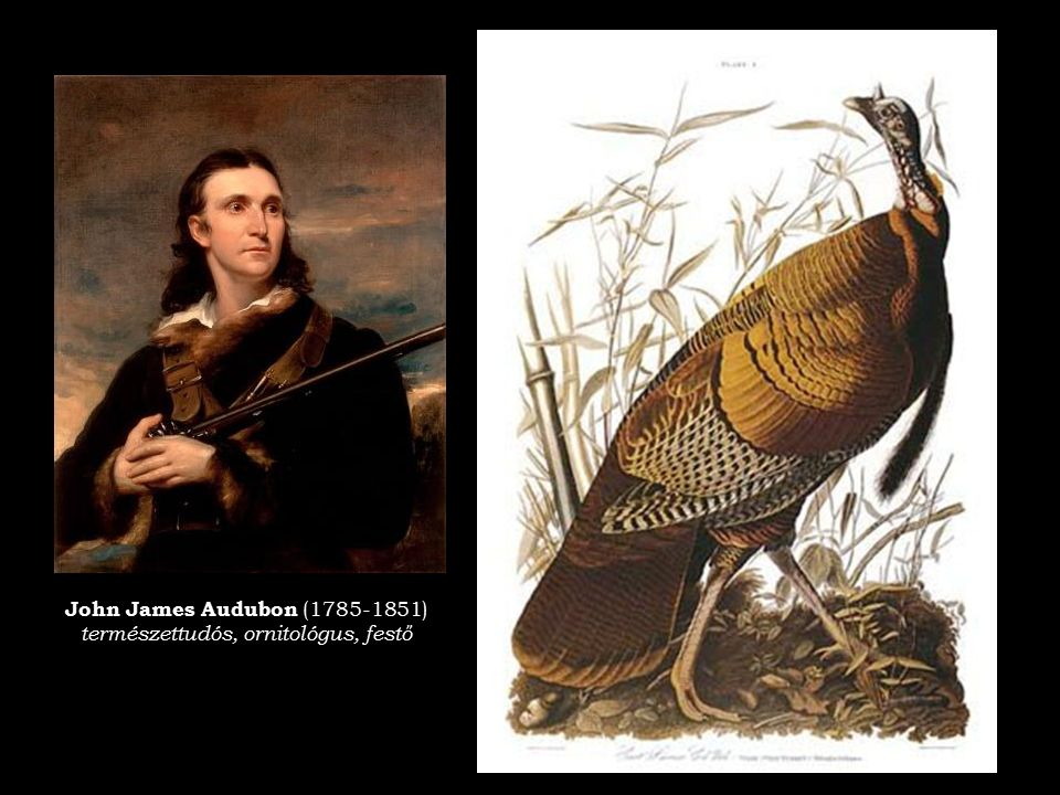 természettudós, ornitológus, festő