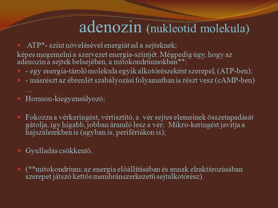 adenozin (nukleotid molekula)