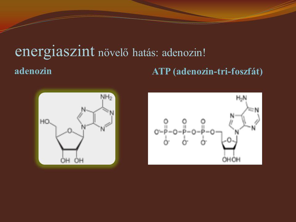 energiaszint növelő hatás: adenozin!