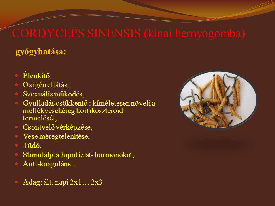 CORDYCEPS SINENSIS (kínai hernyógomba)