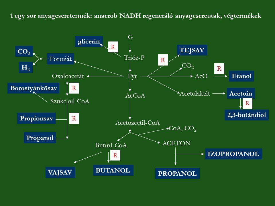 1 egy sor anyagcseretermék: anaerob NADH regeneráló anyagcsereutak, végtermékek