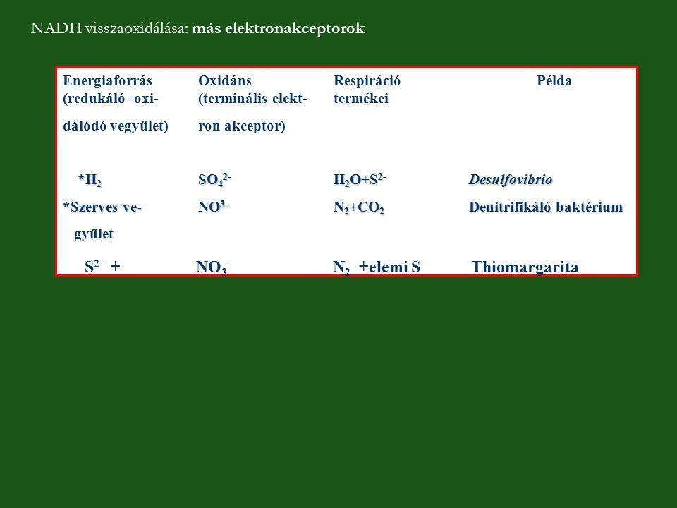 NADH visszaoxidálása: más elektronakceptorok