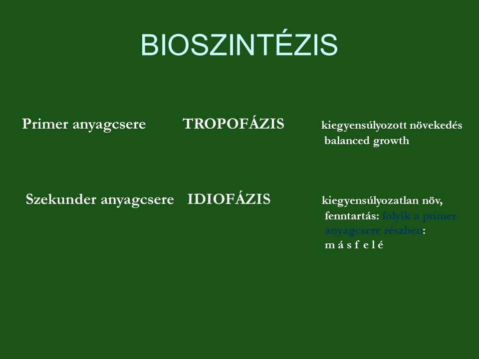 BIOSZINTÉZIS Primer anyagcsere TROPOFÁZIS kiegyensúlyozott növekedés
