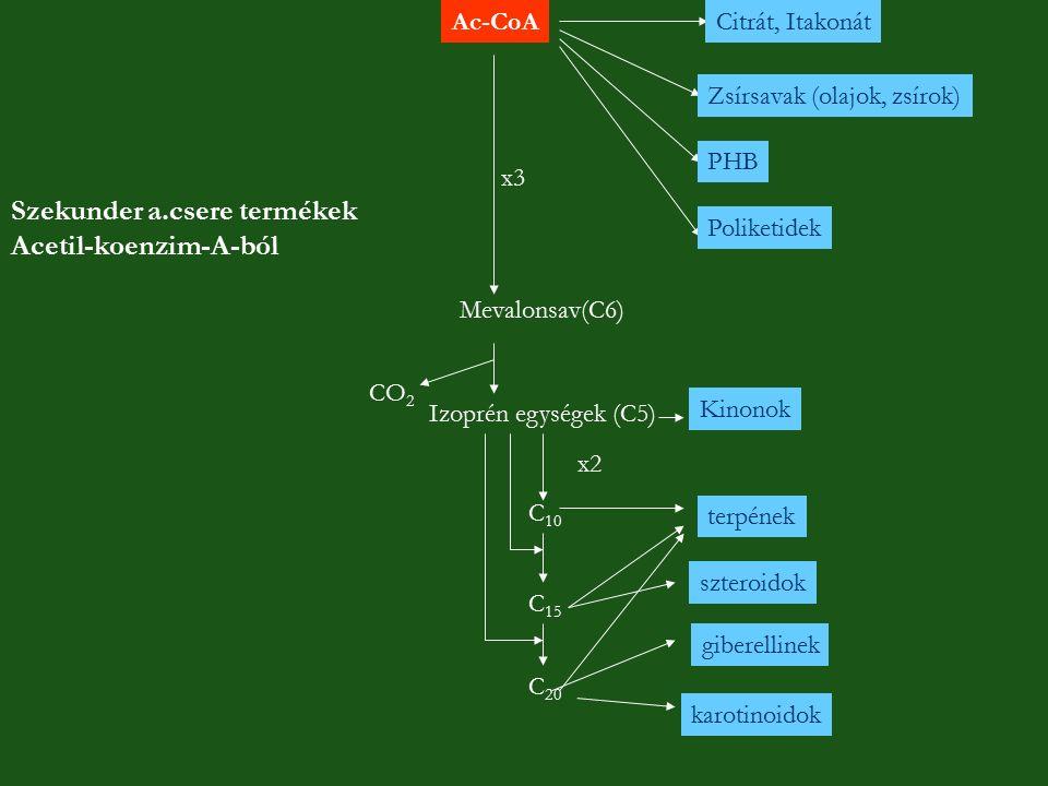 Szekunder a.csere termékek Acetil-koenzim-A-ból