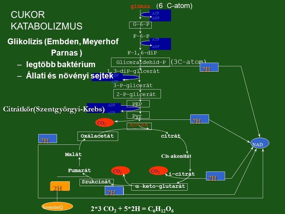 CUKOR KATABOLIZMUS Glikolízis (Embden, Meyerhof Parnas )