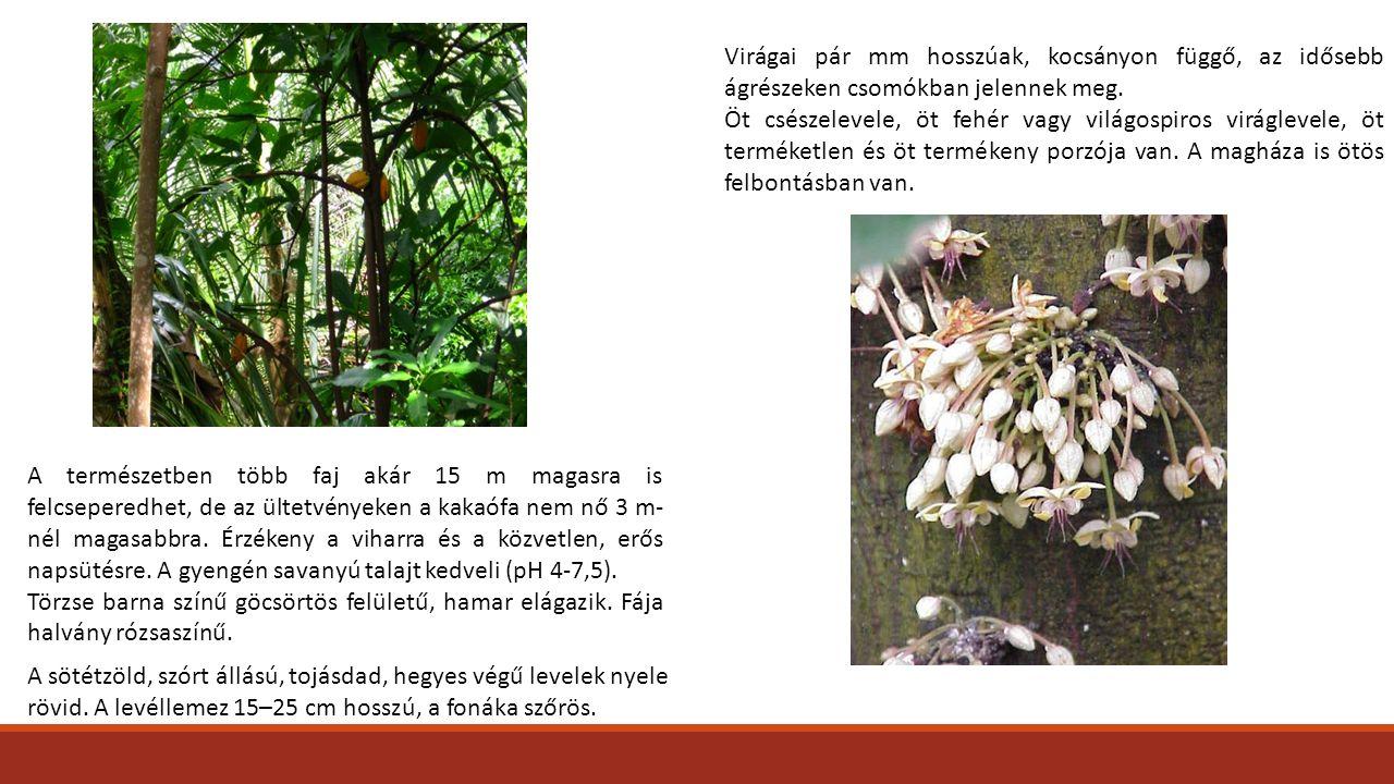 Virágai pár mm hosszúak, kocsányon függő, az idősebb ágrészeken csomókban jelennek meg.