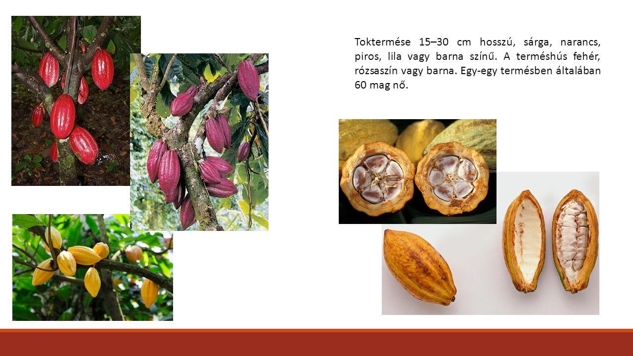 Toktermése 15–30 cm hosszú, sárga, narancs, piros, lila vagy barna színű.