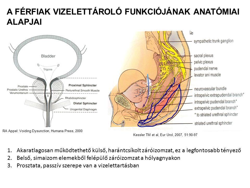 A férfiak vizelettároló funkciójának anatómiai alapjai