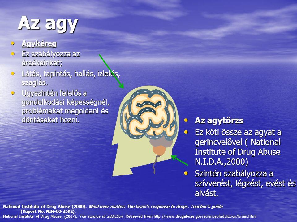Az agy Agykéreg. Ez szabályozza az érsékeinket; Látás, tapintás, hallás, izlelés, szaglás.