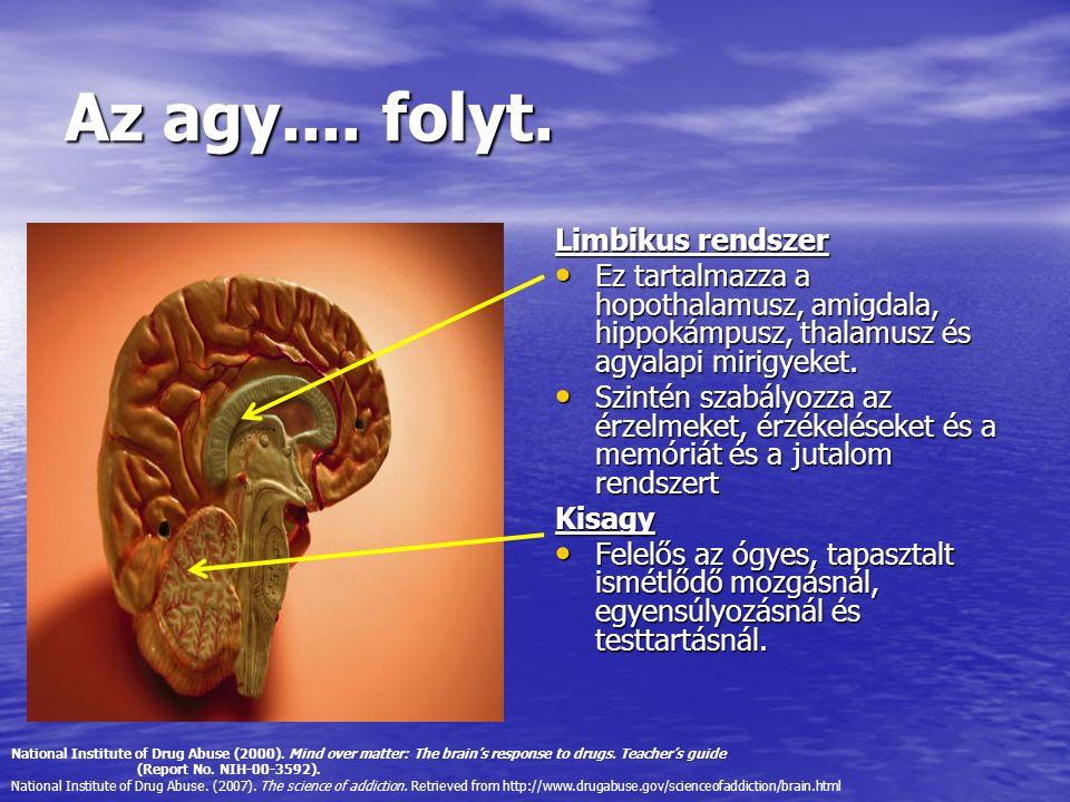 Az agy.... folyt. Limbikus rendszer