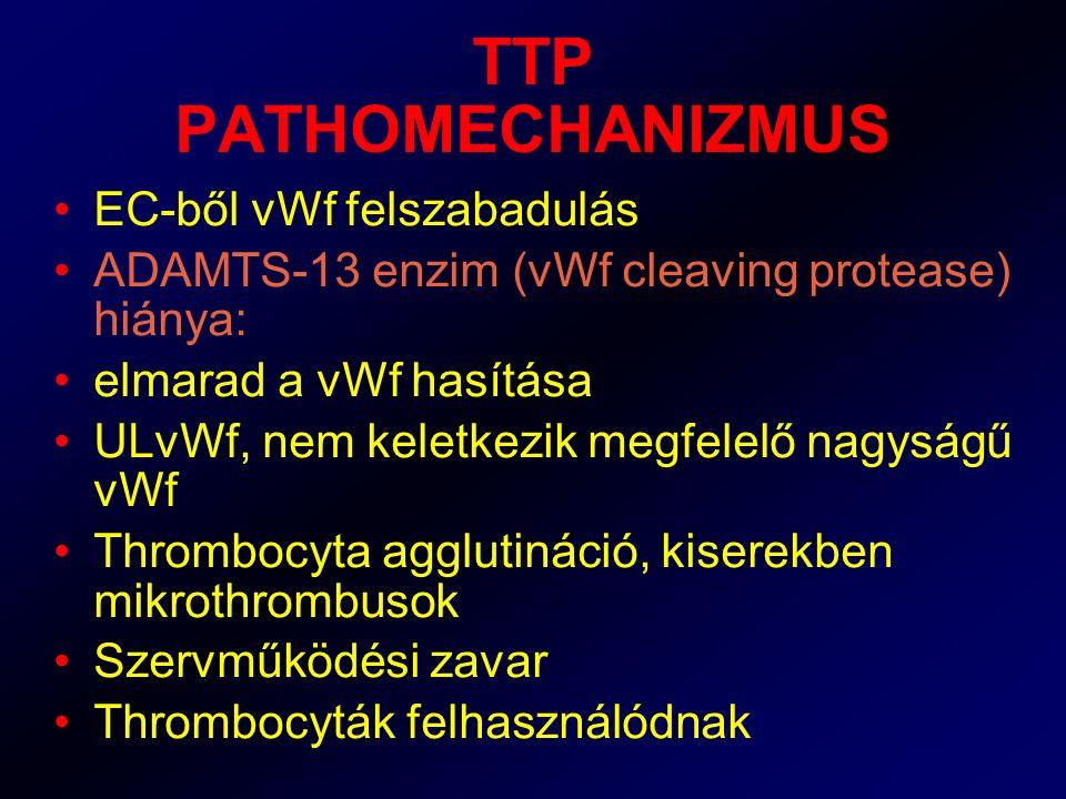 TTP PATHOMECHANIZMUS EC-ből vWf felszabadulás