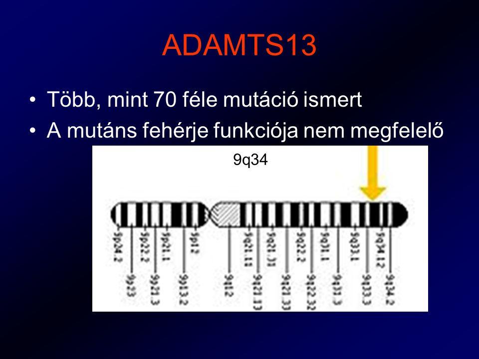 ADAMTS13 Több, mint 70 féle mutáció ismert