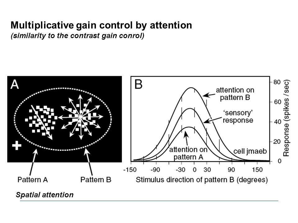 Multiplicative gain control by attention
