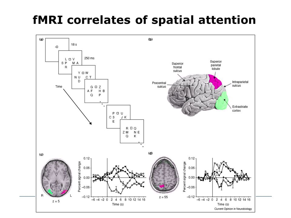 fMRI correlates of spatial attention