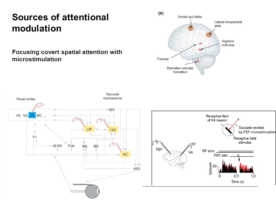 Sources of attentional modulation