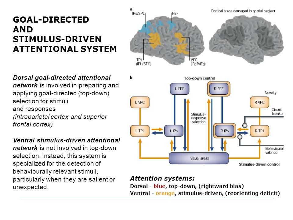 STIMULUS-DRIVEN ATTENTIONAL SYSTEM