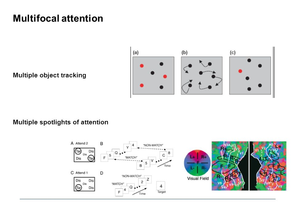 Multifocal attention Multiple object tracking