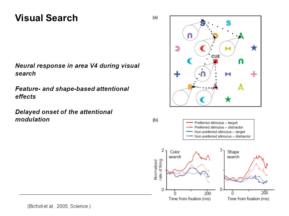 Visual Search Neural response in area V4 during visual search