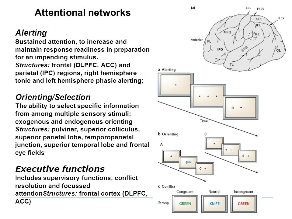Attentional networks Alerting Orienting/Selection Executive functions