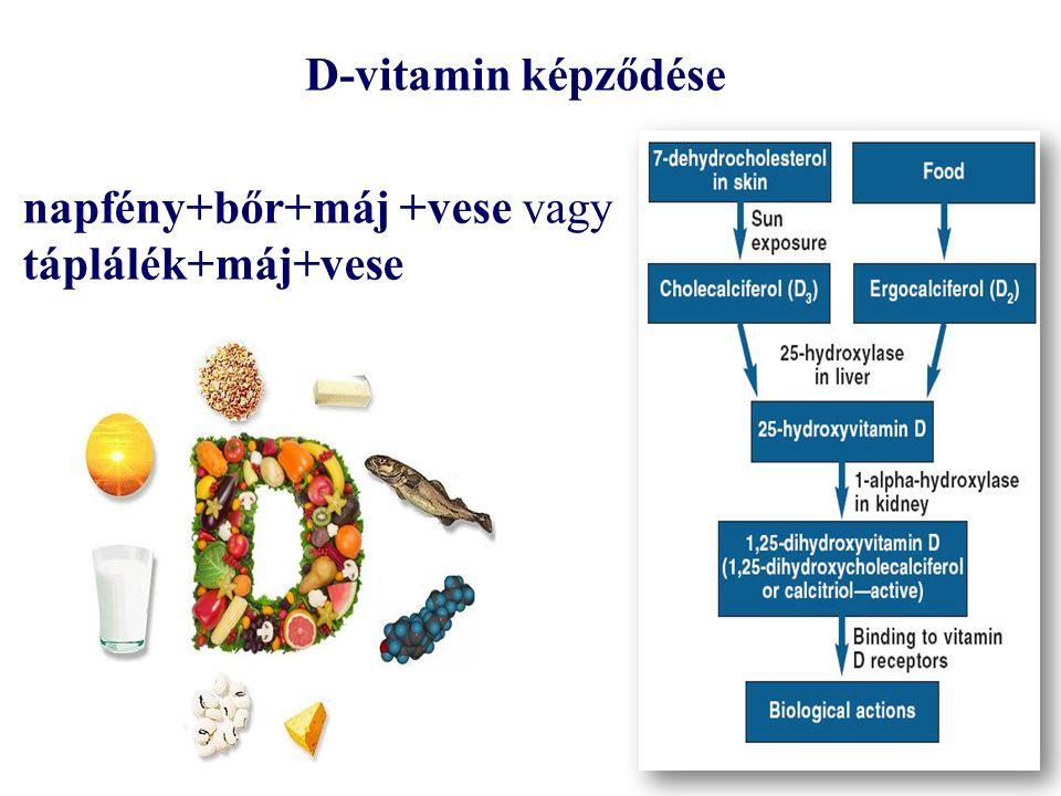 D-vitamin képződése napfény+bőr+máj +vese vagy táplálék+máj+vese