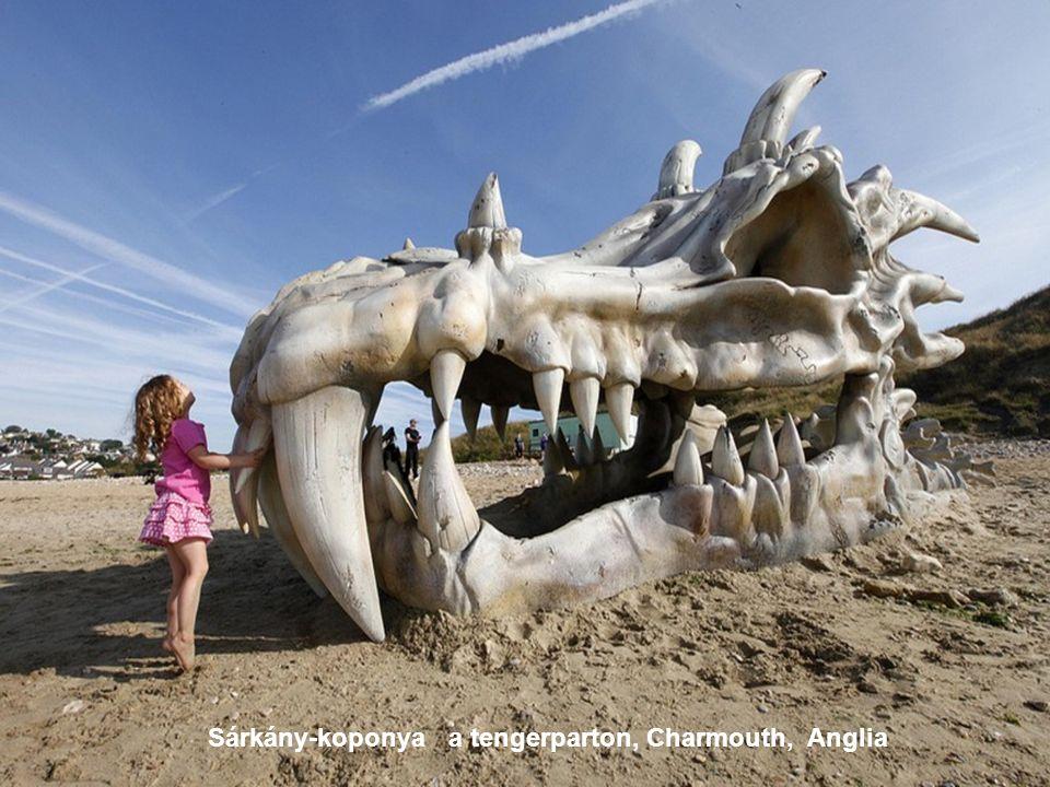 Sárkány-koponya a tengerparton, Charmouth, Anglia