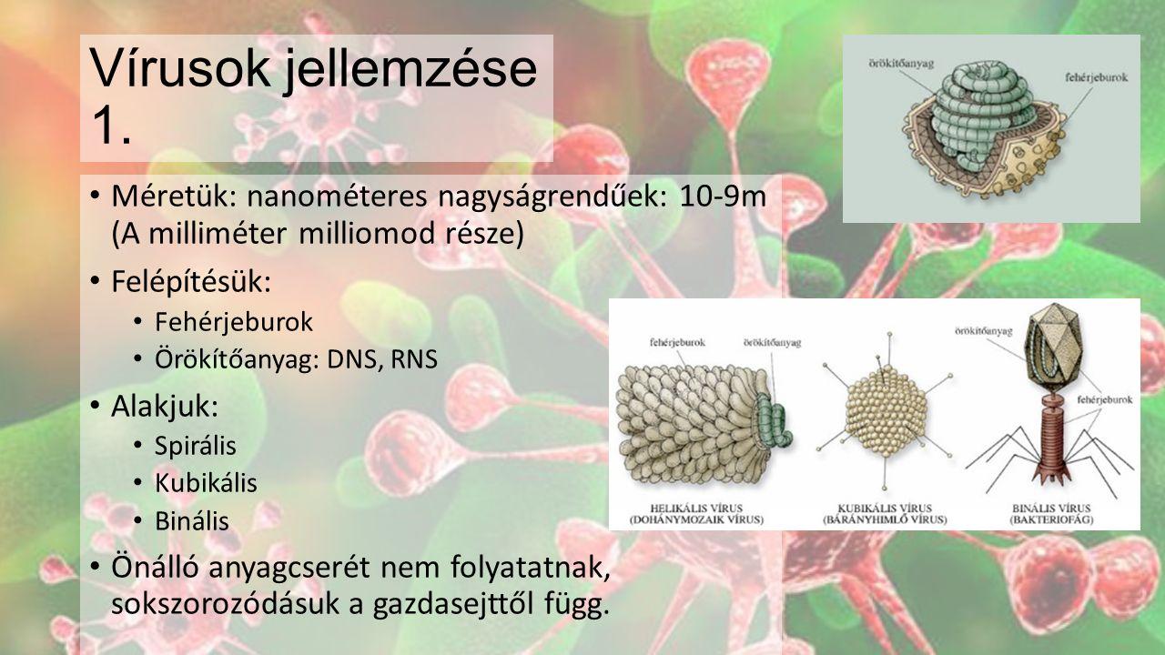 Vírusok jellemzése 1. Méretük: nanométeres nagyságrendűek: 10-9m (A milliméter milliomod része) Felépítésük: