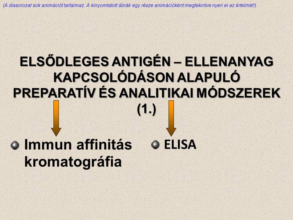 Immun affinitás kromatográfia ELISA