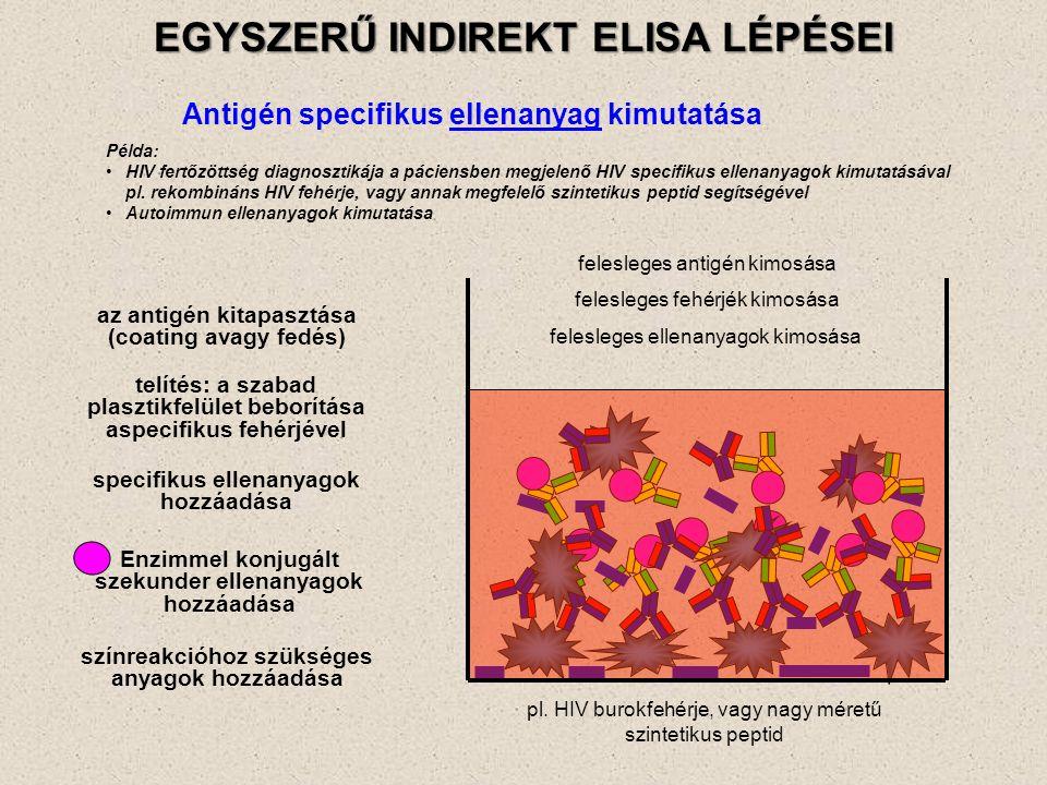 EGYSZERŰ INDIREKT ELISA LÉPÉSEI