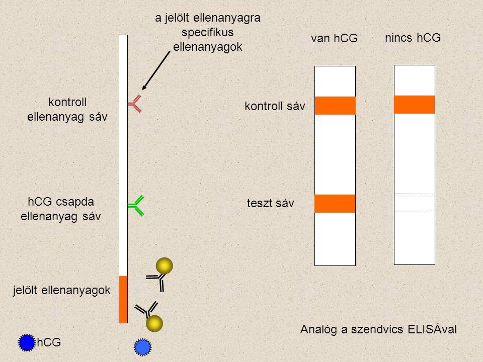 a jelölt ellenanyagra specifikus ellenanyagok