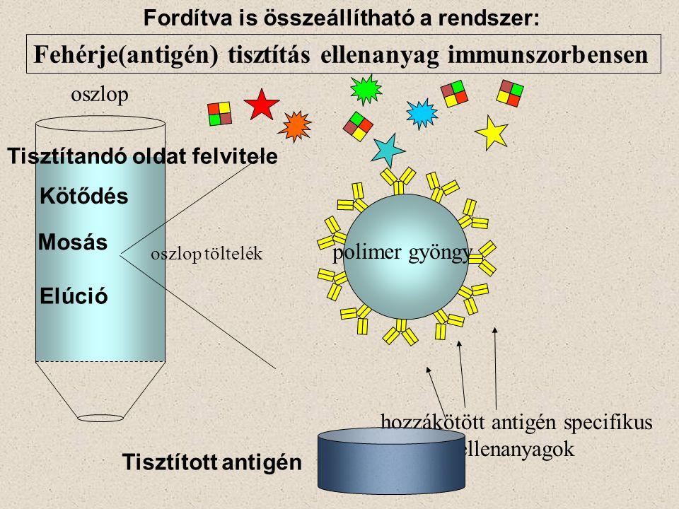 hozzákötött antigén specifikus ellenanyagok