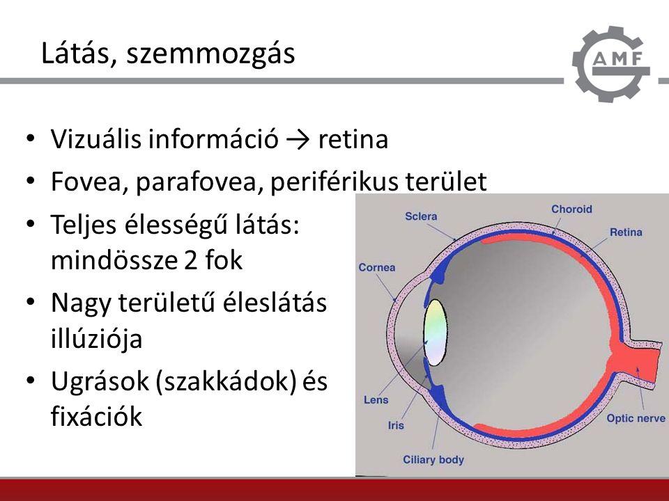 Látás, szemmozgás Vizuális információ → retina