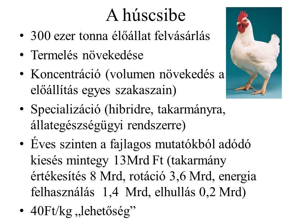 A húscsibe 300 ezer tonna élőállat felvásárlás Termelés növekedése