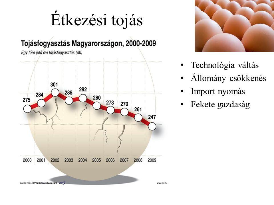 Étkezési tojás Technológia váltás Állomány csökkenés Import nyomás