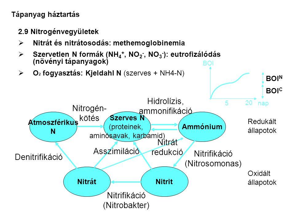 Hidrolízis, ammonifikáció Nitrogén- kötés