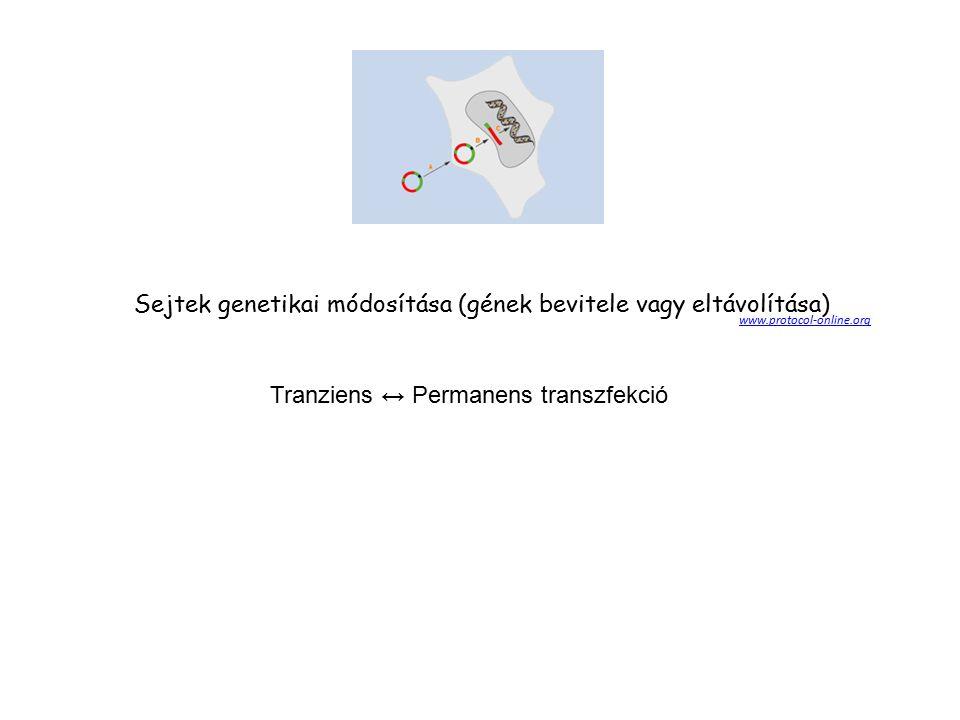 Sejtek genetikai módosítása (gének bevitele vagy eltávolítása)