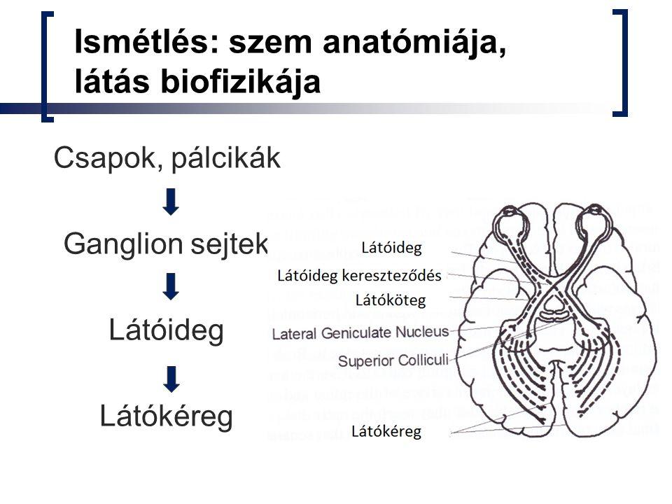 Ismétlés: szem anatómiája, látás biofizikája