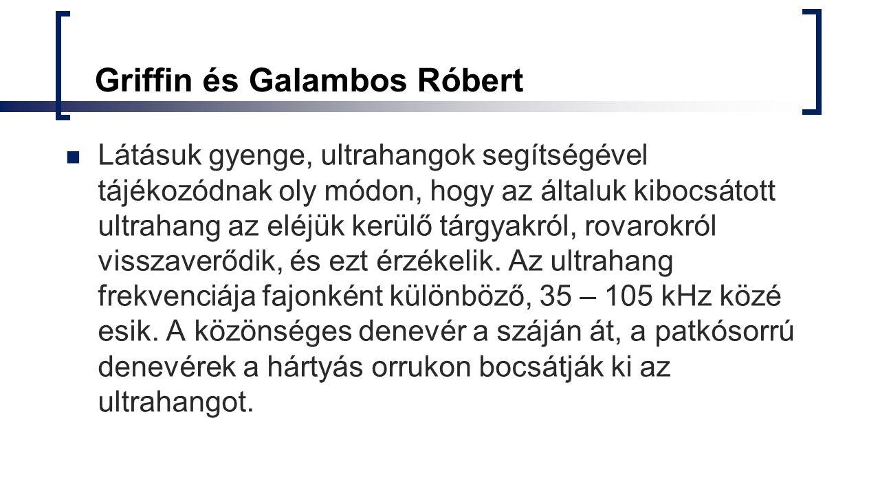 Griffin és Galambos Róbert