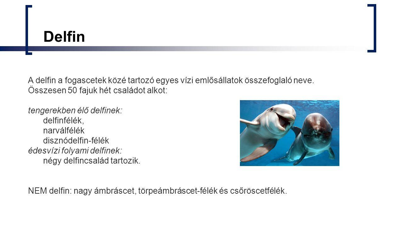 Delfin A delfin a fogascetek közé tartozó egyes vízi emlősállatok összefoglaló neve. Összesen 50 fajuk hét családot alkot: